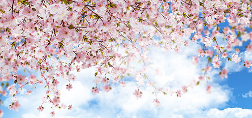 Ücretsiz Katılın: Baharı yoga ile kucaklayın!